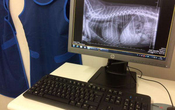 Radiografie